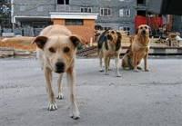 Жительница Запорожья оставила сына на растерзание диким собакам