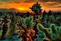 В пустыне Сахара вскоре появятся цветущие рощи