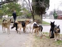Приднестровье страдает от нашествия бродячих собак