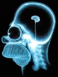 Ученые доказали бесполезность интеллектуальных игр для мозга