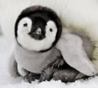 Принц Уильям и его молодая жена стали родителями пингвиненка