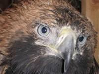Ректор университета в Уфе распорядился усыпить птиц, занесенных в  «Красную книгу»