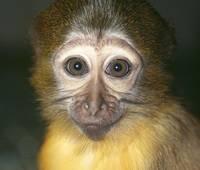 Предсказание обезьянки Фани — победа «Бурановских бабушек» на «Евровидении»
