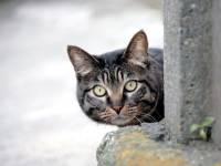На «Фабрике» снова будут раздавать кошек