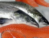 К Новому году Россельхознадзор запретит ввоз норвежской красной рыбы