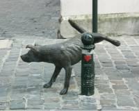 Собаки опорожняются, ориентируя свое тело по линии север — юг