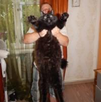 Жители Петрозаводска вырастили гигантского кота