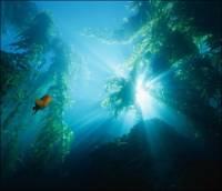 В Марианской впадине обнаружили новый вид рыб