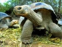 Во Флориде городское движение остановилось из-за 45-килограммовой черепахи