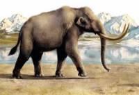 В Пермском крае обнаружен предок мамонта