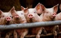 В Чехии из-за контрсанкций РФ рухнули цены на мясо