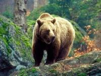 Под Воронежем убили сбежавшего из частного зоопарка медведя, который растерзал пенсионера
