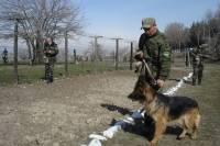 Под Курском украинец устроил перестрелку с российскими пограничниками