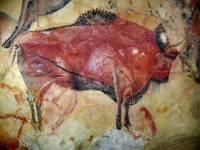 Сибирские ученые проверили подлинность древнего рисунка бизона во французской пещере