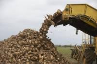 Россия стала мировым лидером по производству сахарной свеклы