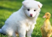 Исследователи рассказали, как правильно сопоставить возраст собаки и человека