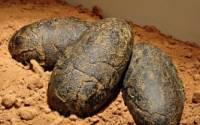 Археологи нашли древнейшие яйца крокодила