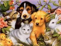 В Общественной палате РФ обсудили, как защитить животных