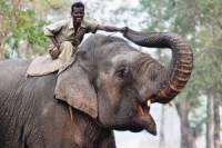 В японском парке слон до смерти забил хоботом мывшего его работника