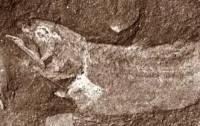 Останки древней рыбы найдены в Китае