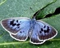 Британского коллекционера признали виновным в серии убийств бабочек
