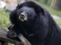 Видео: В Таганроге ищут человека, который прогуливался с медведем во дворе жилого дома