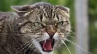В Москве бешеный кот напал на ребенка