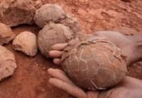 На юге Аргентины пастух нашел яйца динозавров