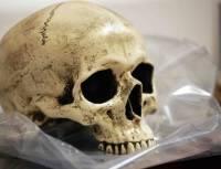В Великобритании обнаружили останки средневекового священника, умершего от голода