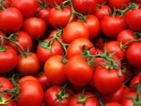 Специалисты назвали размер ущерба РФ от «помидорной войны» с Турцией