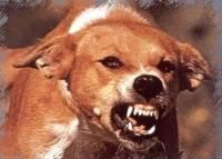 В Анадыре уничтожат всех бездомных животных