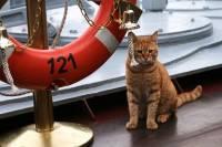 Минобороны показало кота, который участвовал в дальнем походе к берегам Сирии