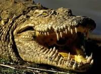 В Зимбабве крокодилы съели священника