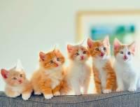 Человеческие проблемы кошек: аллергия