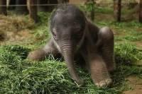 В Московском зоопарке родился детеныш азиатского слона