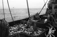В водах Норвежского моря при пожаре на траулере погибли четверо мурманских моряков