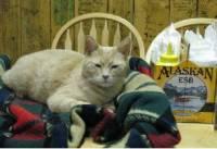 На Аляске умер кот, занимающий должность мэра города
