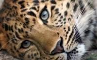 Леопард напал на девочку в контактном зоопарке Саратова