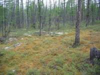 В Приамурье мужчина, заблудившийся в тайге полмесяца назад, сам вышел из леса