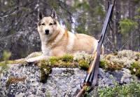 Под Саратовом скончался охотник, в которого выстрелила собака