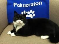 Сотрудникам британского МИД официально запретили кормить кота Палмерстона