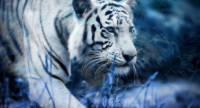 Сотрудника японского зоопарка растерзал редкий хищник
