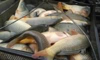 В ЯНАО скончался один из членов семьи, отравившихся купленной на улице рыбой