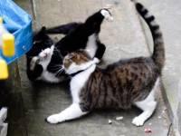 Кот британского МИД одержал победу над котом из офиса Терезы Мэй