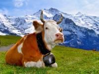 Россельхознадзор запретил ввоз молочных продуктов из Белоруссии