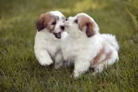 Барбра Стрейзанд завела двух клонов умершей любимой собаки