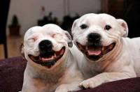 Ученые выяснили, кого чаще кусают собаки