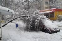 В Москве свыше 2 тысяч деревьев повалены из-за снегопада