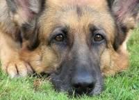 В США собаку вместо Канзаса по ошибке отправили в Японию