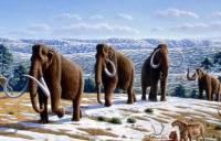 В Прикамье при строительстве моста нашли останки мамонта
